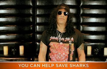 "image for article ""Slash Speaks Up For Sharks"" On Youtube Video"