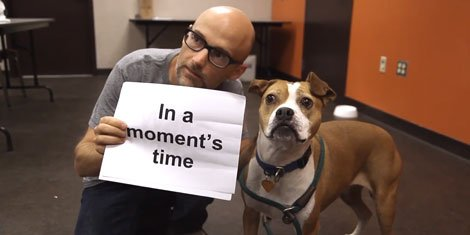 moby-almost-home-lyric-video-dog-cat